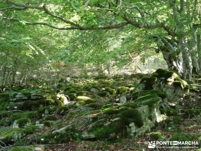 Parque Natural Sierra de Cebollera (Los Cameros) - Acebal Garagüeta;rutas andando por madrid paseos